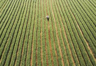 Власти Китая решили углублять реформы в сельском хозяйстве