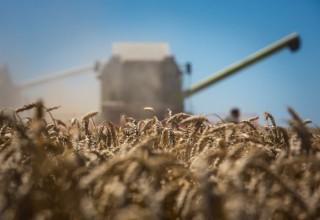 Украина опровергла информацию о срыве поставок зерна в Китай