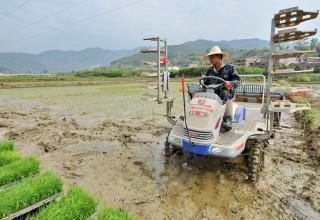 Китайское правительство заявило о токсичности пятой части сельскохозяйственных земель страны