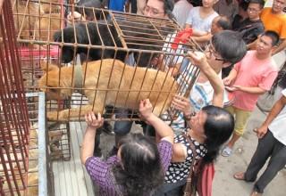 Опрос в Пекине: Собаки – друзья или еда?
