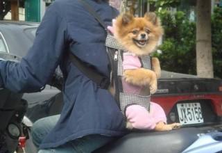 Китаянка покусала полицейского, не пустившего ее в метро с собакой