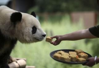 Пряник для панды