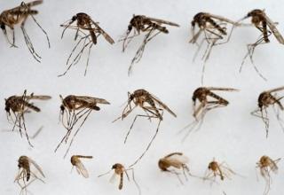 Сильнейшая вспышка лихорадки денге зарегистрирована на юге Китая