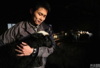 Овечья ферма приносит выпускнику престижного вуза 50 млн юаней в год