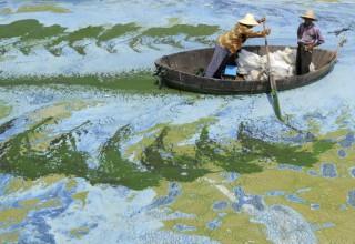 7 причин не быть фермером в Китае