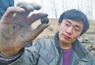 Семена лотоса времен династии Сун откопали в провинции Хэнань