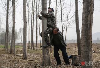 Два китайских инвалида посадили 10 тыс деревьев