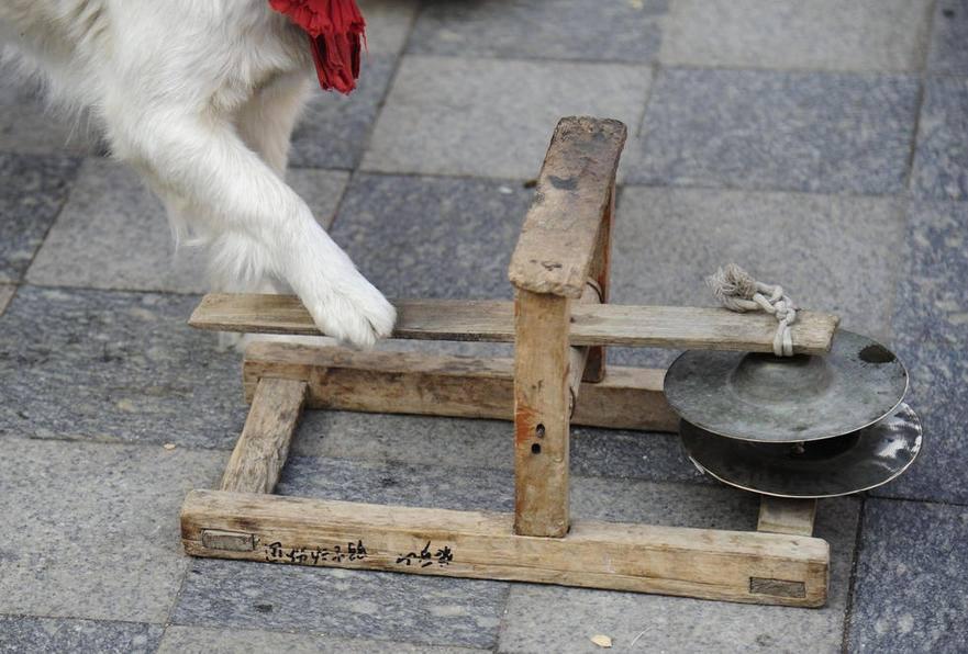 собаки-артисты в Китае