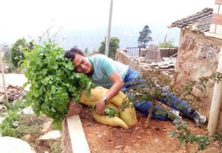 Китайский фермер вырастил редьку весом 15 кг