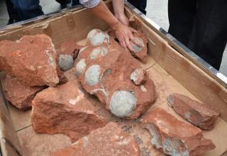 43 окаменелых яйца динозавров нашли на юге Китая (ФОТО)