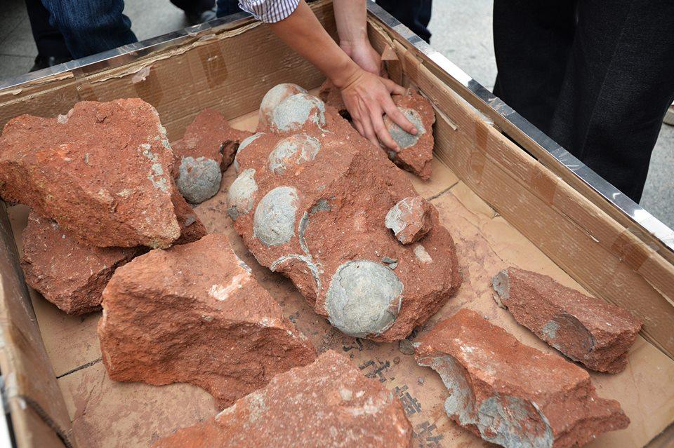 яйца динозавров в Китае