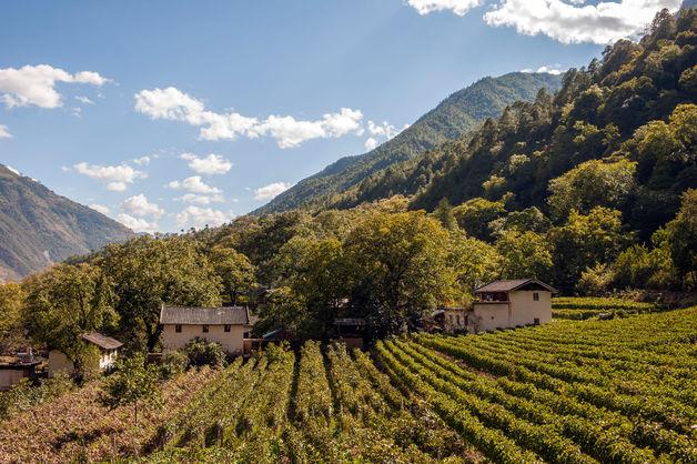 вино Китай Франция