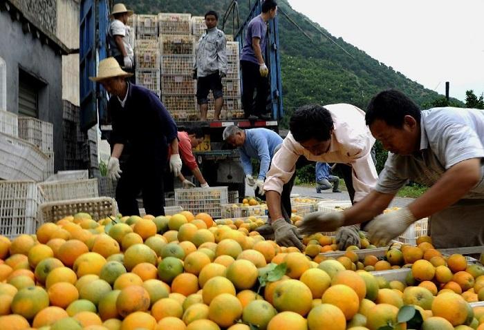 апельсины китайские