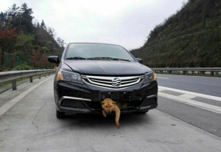 В Китае собака выжила в аварии и нашла нового хозяина