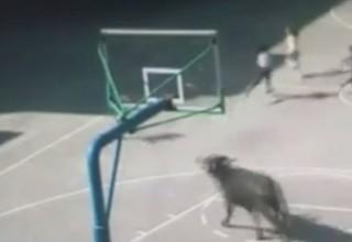 Агрессивный бык атаковал начальную школу в Китае