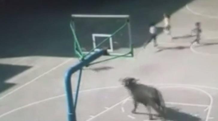 бык атакует школу в Китае