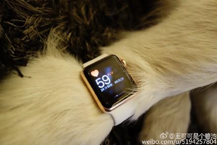 сын китайского миллиардера подарил собаке золотые часы Apple