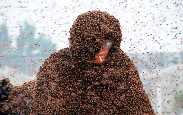 пчелы китай