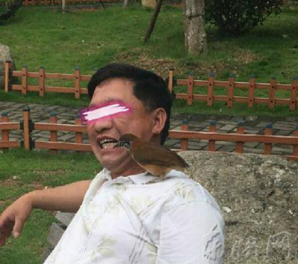 китаец приучил птицу чистить ему зубы