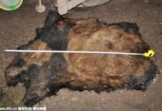 Десять человек арестованы в Китае по подозрению в убийстве панды и контрабанде ее мяса