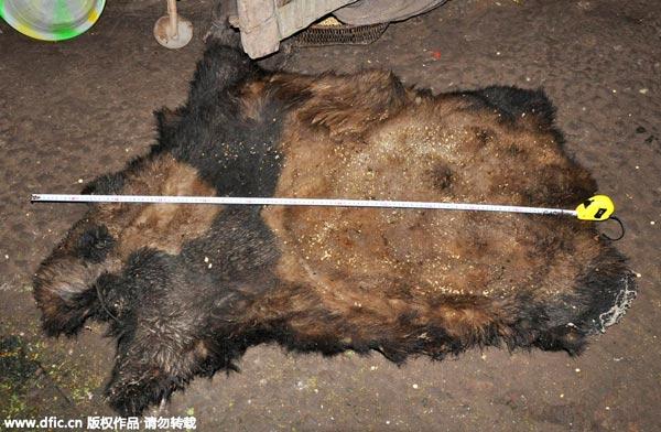 убийство панды в китае