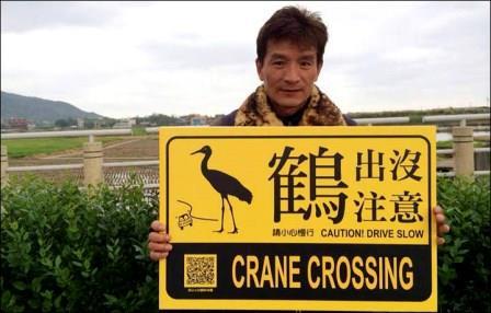 Сибирский журавль по ошибке мигрировал на остров Тайвань