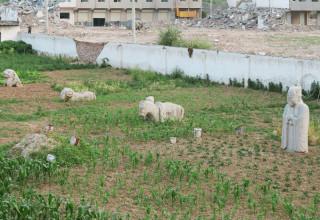 Жители города Сиань разбили огород на месте древних захоронений