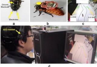 Китайский студент научился управлять тараканом силой мысли