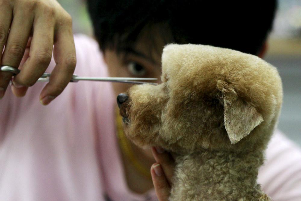 Стрижка собаки в зоосалоне на Тайване. Такая прическа обходится хозяину животного в $39 и требует 2 часа работы мастера.