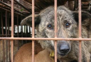 Петиция против фестиваля поедания собак в Китае собрала более 3,5 млн подписей