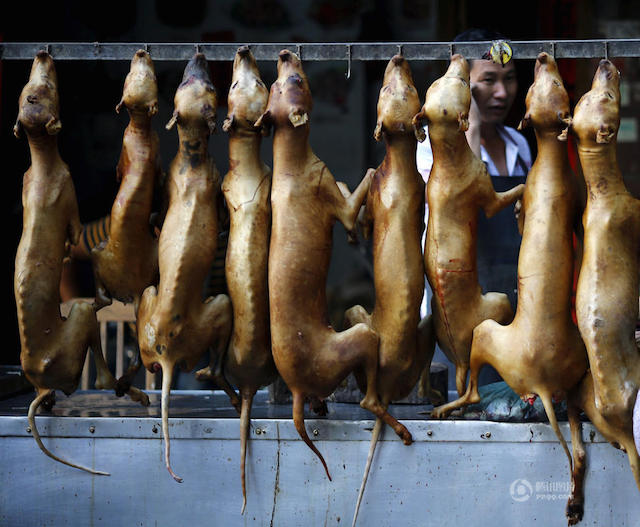 dog-meat-festival-12