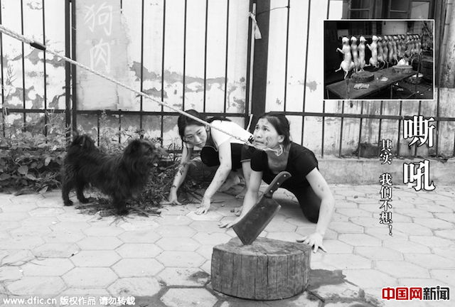 китайские танцовщицы против фестиваля собачьего мяса