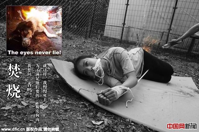 акция против жестокого убийства собак в Китае