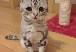 Грустная кошка из Пекина покорила интернет