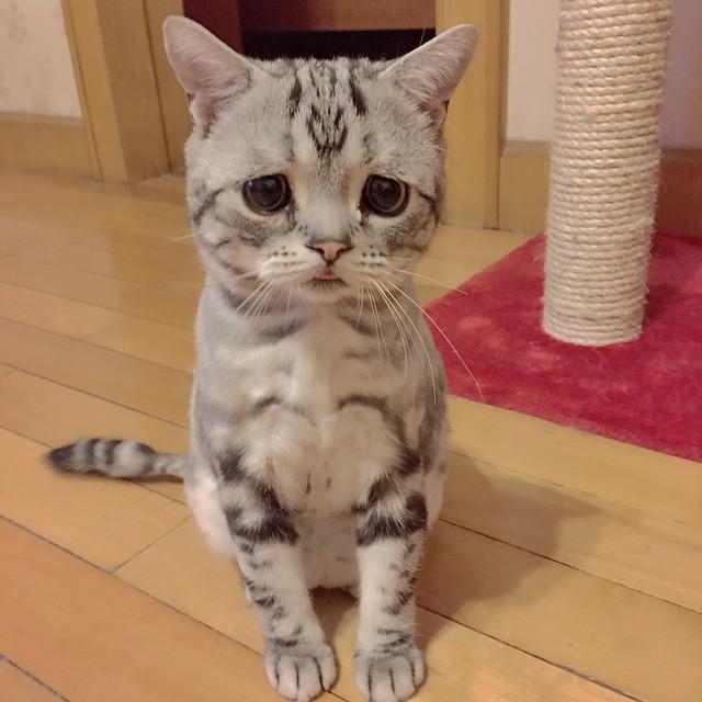 грустная кошка из Китая