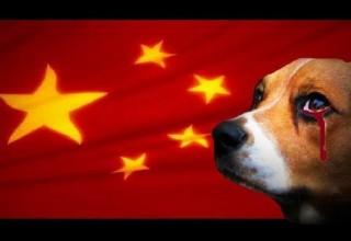 Мир протестует против ежегодного фестиваля поедания собак в Китае
