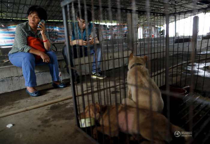 65-летняя жительница Тяньцзиня Ян Сяоюнь второй год подряд спасает собак от съедения в Юйлине