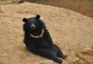 Щенки или медвежата? Китайский крестьянин невольно нарушил закон, перепутав животных