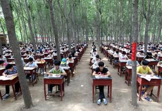 Лесная школа в Китае
