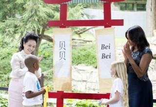 Детеныш панды из зоопарка в Вашингтоне получил имя от жен лидеров США и КНР