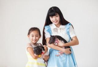 Наука и бизнес: китайский институт выставит на продажу «лабораторных» свиней