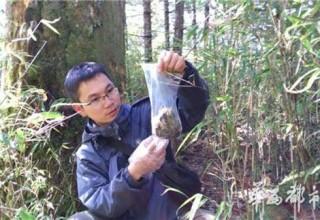 Есть такая китайская профессия — собиратель экскрементов панды