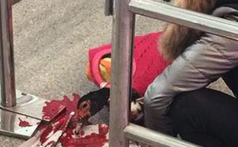 китаянка зарезала утку прямо на вокзале