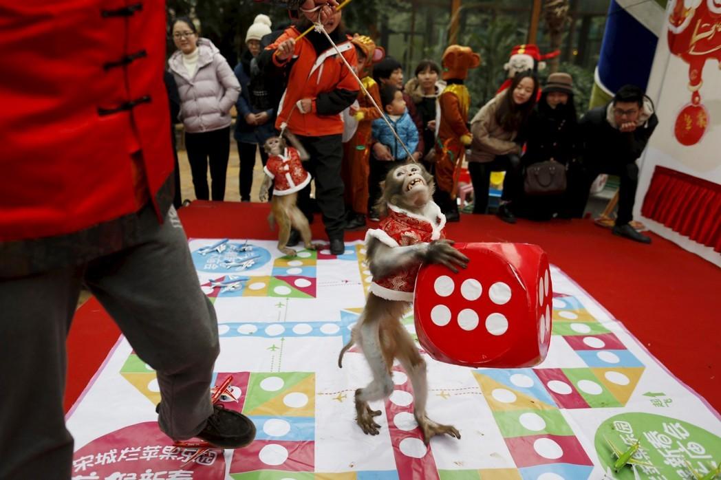 Обезьянка держит кубик во время представления в городе Ханчжоу накануне наступления года Обезьяны по лунному календарю.