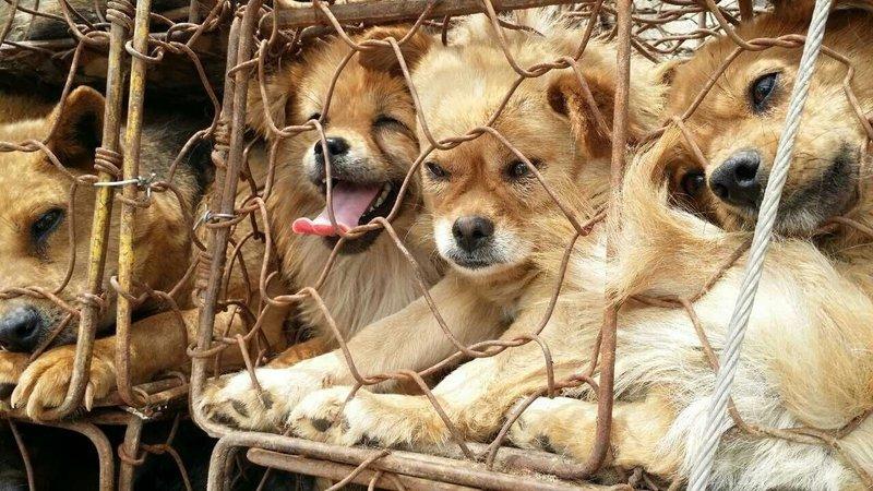 Собаки на оптовом рынке в провинции Гуандун. Фото: Duo Duo Animal Welfare Project