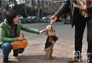 В Китае собака научилась свободно ходить на задних лапах после ампутации передней