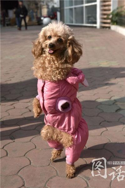 собака на задних лапах