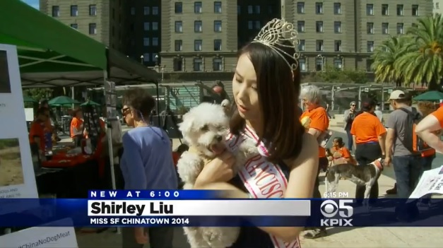Ширли Лю, мисс Чайнатаун 2014, на калифорнийской акции протеста против оптовой торговли собаками и кошками в Гуандуне.