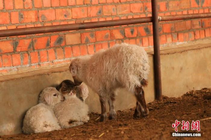 Фото: CCTV/Chinanews.com