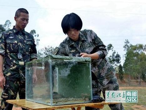 Девушка-солдат достает оружие из аквариума со змеями. Фото: www.81.cn